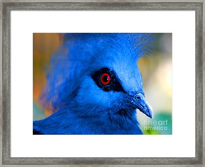 Bird's Eye View Framed Print by Tap  On Photo