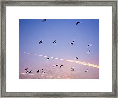 Birds Flying At Sunset Framed Print by Sarah Palmer