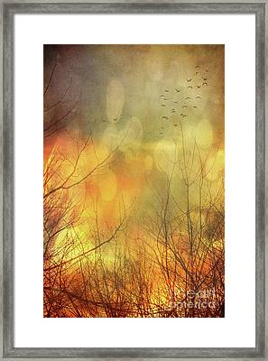 Birds In Flight At Sunset Framed Print by Sandra Cunningham
