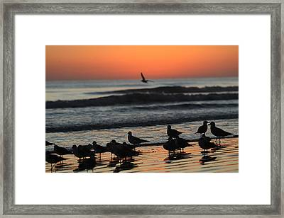 Birds Of A Feather Framed Print by Jose Rodriguez
