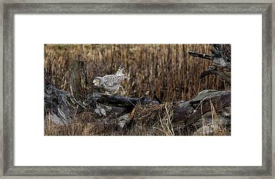 Birds Of Bc - No.13 - Snowy Owl Doo Doo Framed Print by Paul W Sharpe Aka Wizard of Wonders