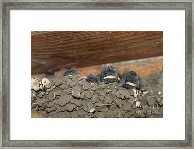 Birds  Picture Framed Print by Preda Bianca