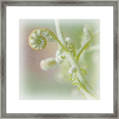 Birth Of A Fern Framed Print by Bonnie Bruno