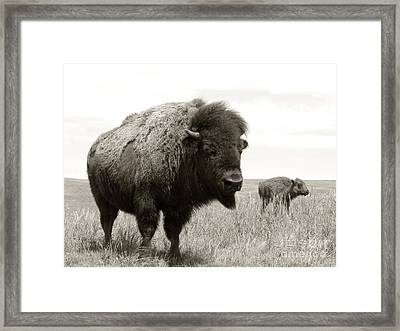 Bison And Calf Framed Print by Olivier Le Queinec