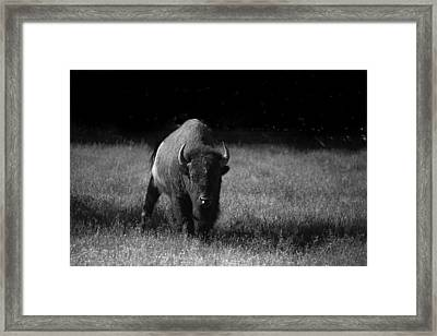 Bison Framed Print by Ralf Kaiser