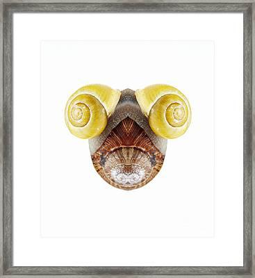 Bizarre Creature Framed Print by Michal Boubin