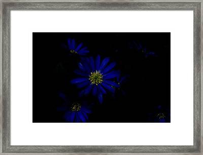 Black And Blue Framed Print by Travis Crockart