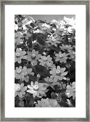 Black And White Flowers Framed Print by Amy Fose