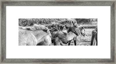 Black And White Image Of Icelandic Framed Print by Robert Postma
