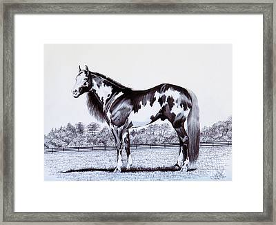 Black And White Overo Paint Horse Framed Print by Cheryl Poland