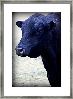 Black Angus Bull - Side Profile Framed Print by Tam Graff