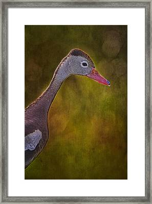 Black Bellied Whistling-duck Framed Print by Anne Rodkin