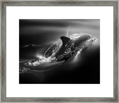 Black Dolphin Framed Print by Steve Munch