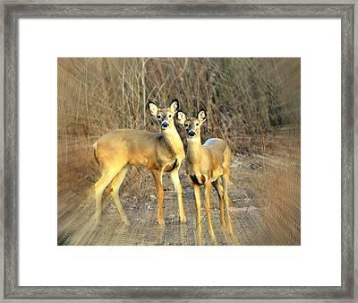 Black Ear Deer Framed Print by Marty Koch