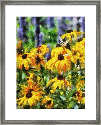 Black Eyed Susans II Framed Print by Jai Johnson