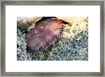 Blend In Framed Print by Eric Chapman