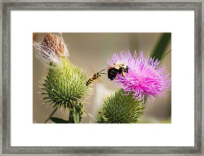 Blind Side Attack Framed Print by Bill Pevlor
