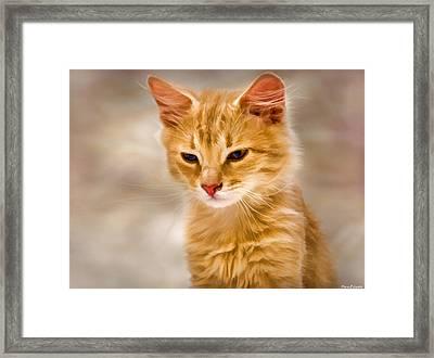 Blondie Framed Print by Steven Richardson