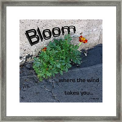 Bloom Where The Wind Takes You Framed Print by J R Baldini