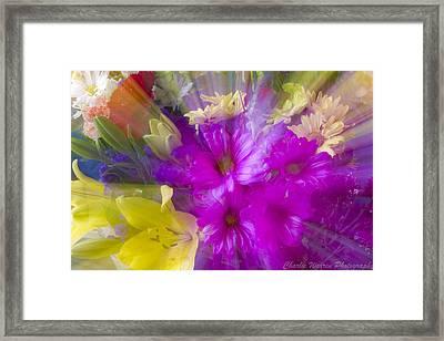 Bloom Zoom Framed Print by Charles Warren