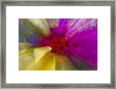 Bloom Zoom2 Framed Print by Charles Warren