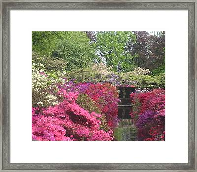 Blooming Flowers Manneken Pis Framed Print by Karin Vergnoux