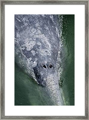 Blow-hole Framed Print by Greg Nyquist