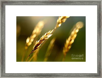 Blowing In The Wind Framed Print by Thomas R Fletcher
