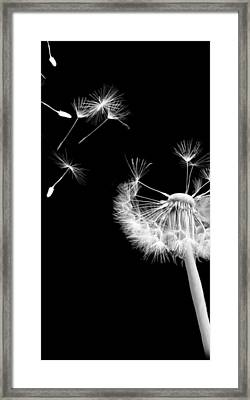 Blown Away Framed Print by Rhonda Barrett