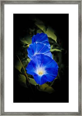 Blue Beauty Framed Print by Swift Family