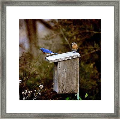 Blue Birds Framed Print by Todd Hostetter