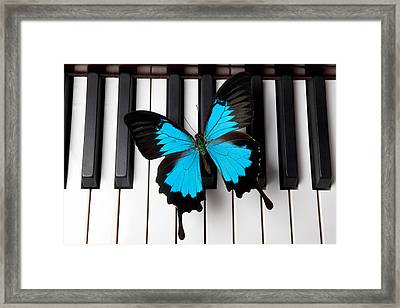Blue Butterfly On Piano Keys Framed Print by Garry Gay