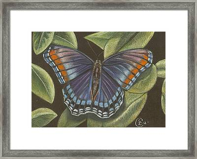 Blue Butterfly  Framed Print by Stephanie L Carr