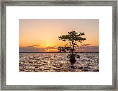 Blue Cypress Lake Sunrise Framed Print by Claudia Domenig