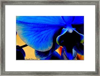 Blue Diamonds Orchids Framed Print by Danielle  Parent