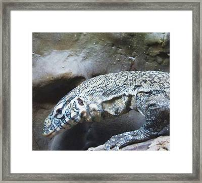 Blue Dragon Framed Print by Todd Sherlock
