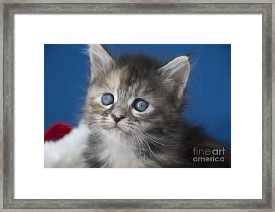 Blue  Framed Print by Elaine Hillson