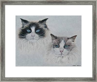 Blue Eyed Cats Framed Print by Marla Saville