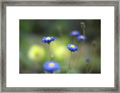 Blue Flowers Framed Print by Myu-myu
