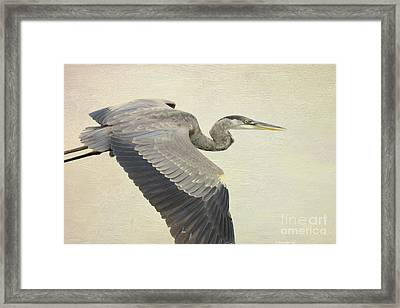 Blue Heron On Canvas Framed Print by Deborah Benoit