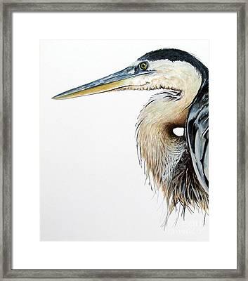 Blue Heron Study Framed Print by Greg and Linda Halom