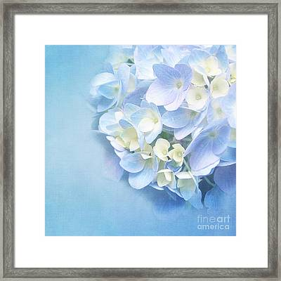 Blue Hydrangea Framed Print by VIAINA Visual Artist