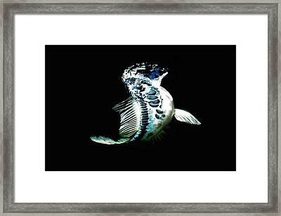 Blue Koi On The Rise Framed Print by Don Mann
