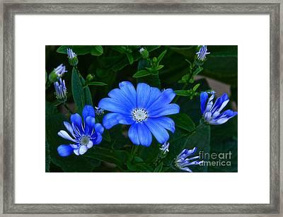 Blue Magic Framed Print by Byron Varvarigos