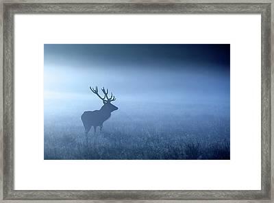 Blue Mist Framed Print by MarkBridger