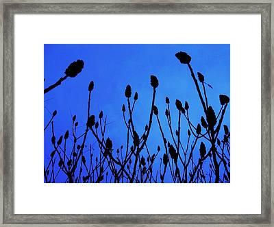 Blue Morning Framed Print by Todd Sherlock