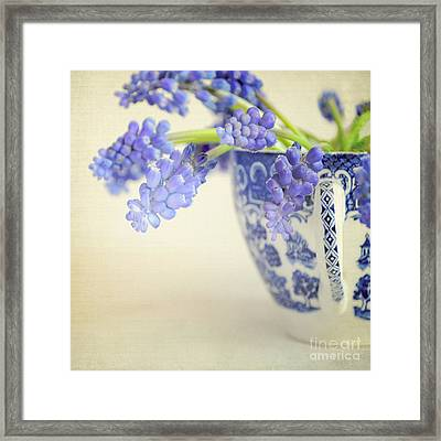 Blue Muscari Flowers In Blue And White China Cup Framed Print by Lyn Randle