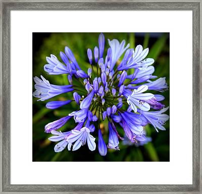 Blue On Blue Framed Print by Karen Wiles