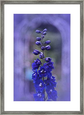 Blue Framed Print by Richard Cummings