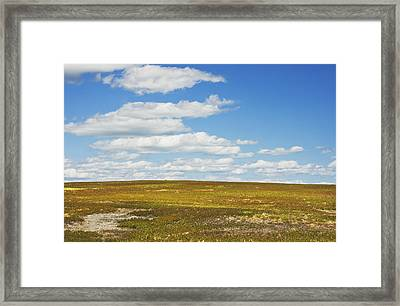 Blue Sky And Clouds Over Blueberry Farm Field Maine Framed Print by Keith Webber Jr